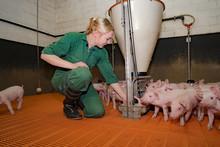 Futterhygiene In Der Schweineh...