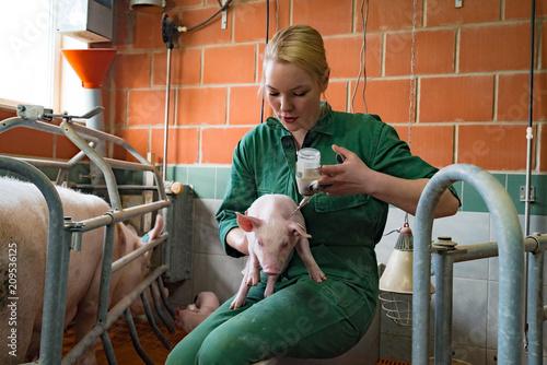 Antibiotikaeinsatz in der Massentierhaltung, junge Frau behandelt Saugferkel