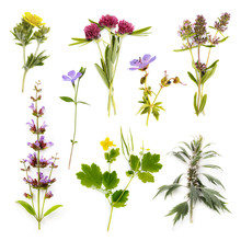 Set Of Herbs Isolated On White...