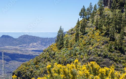 Deurstickers Canarische Eilanden Gran Canaria, June
