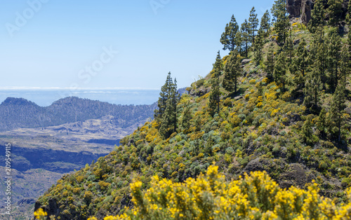 Poster Canarische Eilanden Gran Canaria, June
