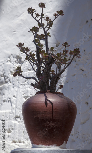 Tuinposter Canarische Eilanden outdoor decor - jade plant