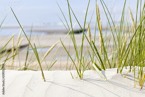 Tuft Of Grass In Beach Dunes, Germany