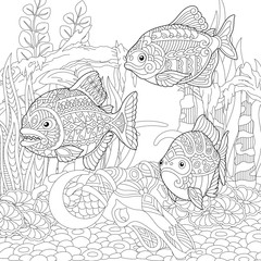 Piranhas. Predatory fishes. Coloring Page. Colouring picture. Adult Coloring Book idea.