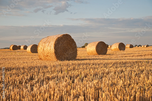 Photo Sunset on the field with rolls of hay