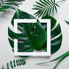Rama tropikalnych liści Monstera i palmy na białym tle miejsca na tekst. Widok z góry, płaski układ
