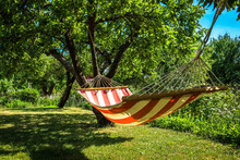 A Striped Hammock Between Two ...