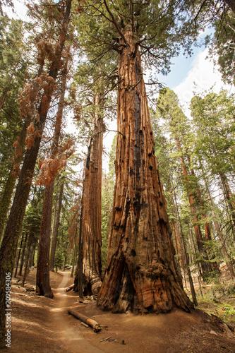 Keuken foto achterwand Verenigde Staten Sunset in Sequoia national park in California, USA
