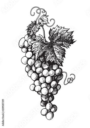 Hand drawn bunch of grapes Fototapeta
