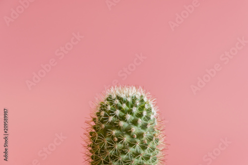 Fotobehang Cactus cactus on a pink background