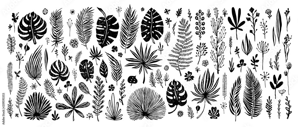 Fototapety, obrazy: big Set of black doodle elements. exotic tropical leaves on a white background. Vector botanical illustration. Great design elements for congratulation cards, banners and others