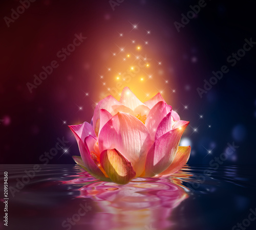Garden Poster Lotus flower lotus Pink floating light sparkle purple background