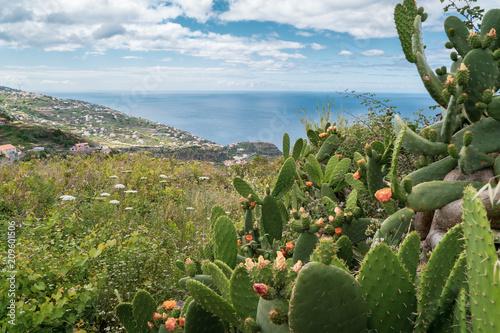 Wandern auf Madeira - Blühender Kaktus mit Meer im Hintergrund Poster