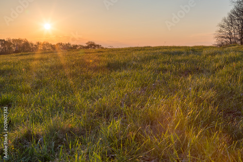 Canvas Prints Honey Beautiful spring sunrise, clouds and sky are painted in bright colors, in the foreground are luscious green grass