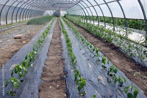 Photo  plantation agricole