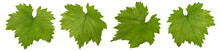Grape Leaf Isolated On White B...