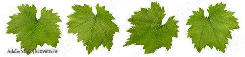 Valokuva grape leaf isolated on white background