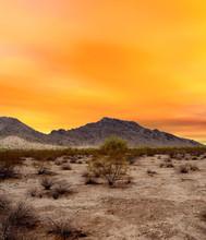 Sonora Desert Sunset Arizona
