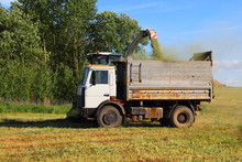 Agriculture, Harvesting, Rural Landscape – Onboard Truck For Loading Crops On The Background Of The Forest And The Jib Combine Harvester, Side View