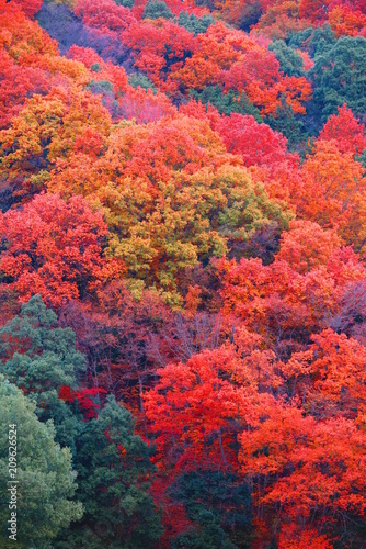 Papiers peints Corail 秋の山の公園の風景2