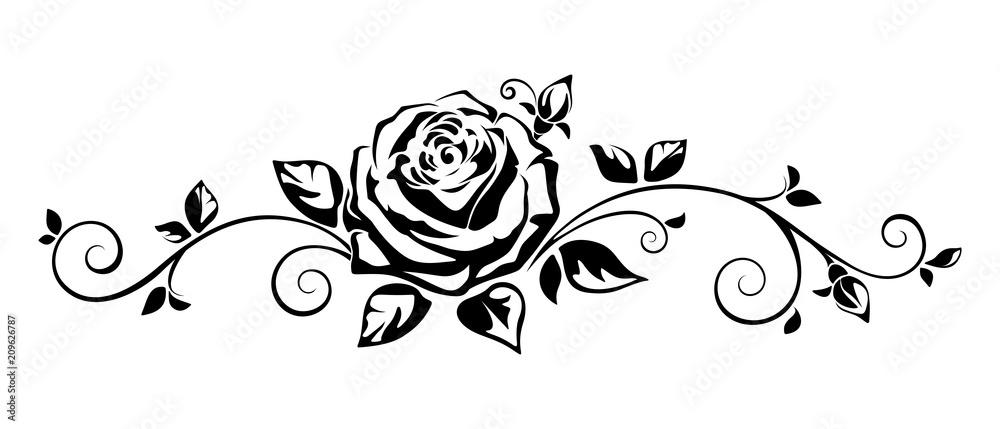 Fototapeta Vector horizontal black and white vignette with a rose.