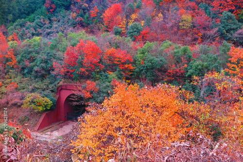 In de dag Crimson 秋の山の公園の風景23