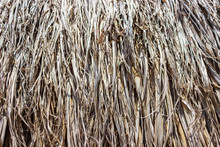 Part Of The Roof From Dry Palm Leaves. A Large Background Background Is Long, Dry, Brown, Gray Palm Leaves.