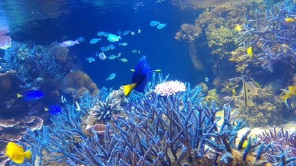 Fototapeta na wymiar aquarium in japan