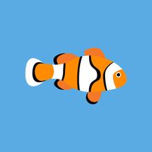 Amphiprion Clown Fish