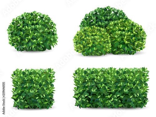 Photo Vector bush in different forms