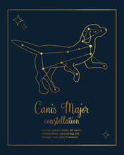 The Constellation Canis Major Star In The Night Sky