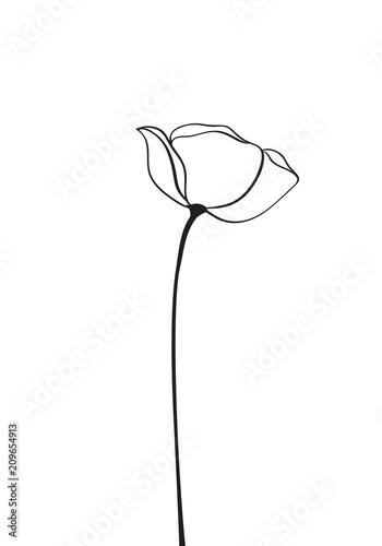 Poppy flower icon, logo, label - 209654913