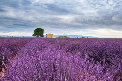 Tuinposter Purper Lavanda in Provenza, Francia