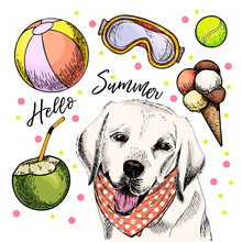 Vector Portrait Of Labrador Retriever Dog. Hello Summer Illustration. Coconut Cocktail, Balls, Ice Cream. Hand Drawn Pet Portait. Poster, T-shirt Print, Holiday Celebration, Postcard, Summertime.