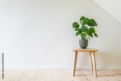 Wooden table with a potted plant, fruit salad tree (Monstera deliciosa) Fototapete