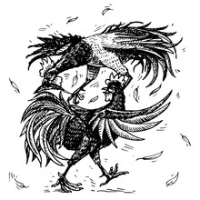 Cockfight Or Gamecocks. Bird S...