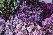 Beautiful Fresh Blossoming Flo...