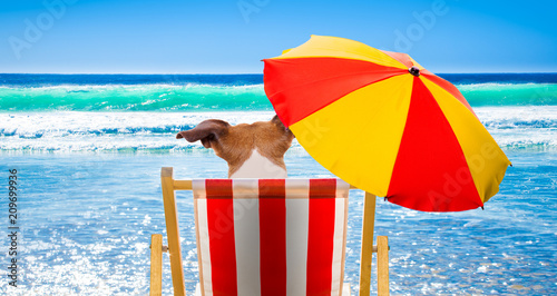 Deurstickers Crazy dog dog relaxing on a beach chair