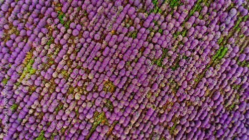 Cadres-photo bureau Vue aerienne Lavender field aerial view. Top view.