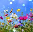 Leinwandbild Motiv Blumenwiese - Sommer - Sommerwiese Hintergrund