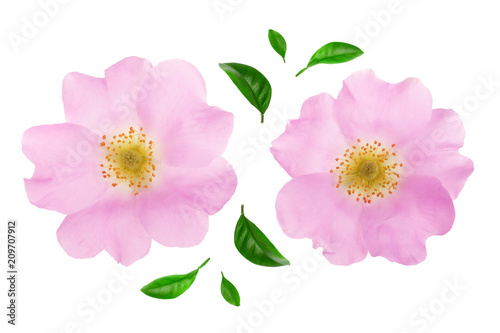 Aluminium Prints Dahlia Rosehip flower with leaf isolated on white background close up