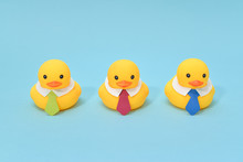 Office Life Concept, Rubber Ducks Are Waring Neckties, Ready To Work