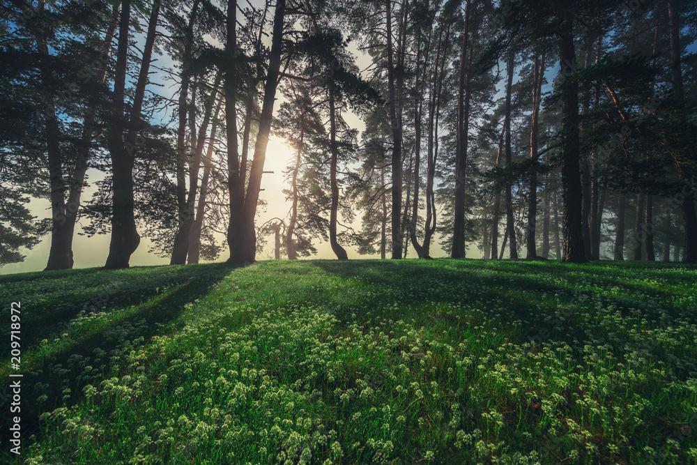 Fotografie, Obraz  Forest landscape and morning fog in spring