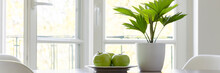 Three Green Apples On Plate And Fresh Plant In White Pot Standing On Table In The Real Photo Of Bright Room Interior With Windows