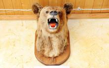Stuffed Bear's Head With Open ...