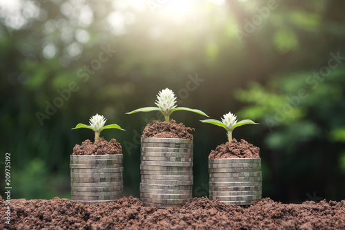Fotografía  Saving money concept with money coin stack growing for business