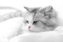Unusual Cat Portrait. Shallow ...