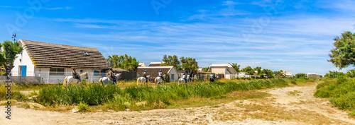 Promenade à cheval dans campagne camarguaise en Provence, France Fototapet