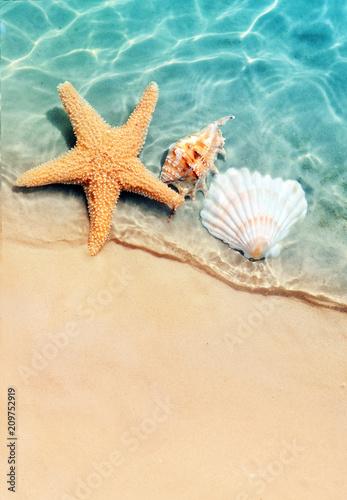 Okleiny na drzwi - Kolorowe - Wielobarwne  starfish-and-seashell-on-the-summer-beach-in-sea-water