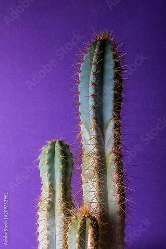 Papiers peints Cactus cactus plant on colorful background, copy space